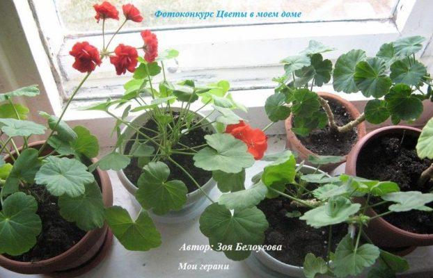 лучшие растения +для дома