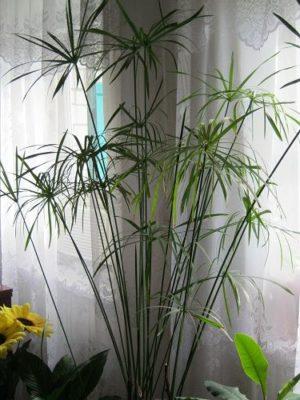 цветы пальма фото