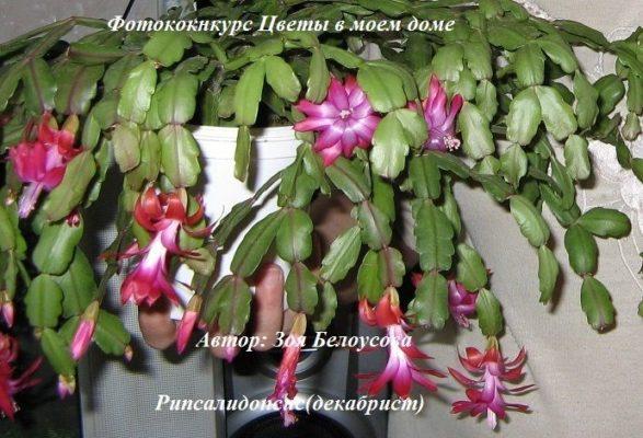 растения +для дома