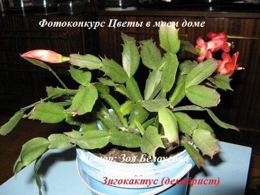 растения цветущие зимой