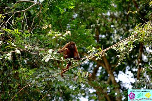 амазонки фото