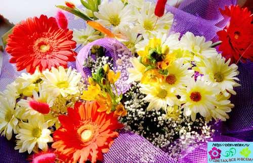 цветы заказ цветов