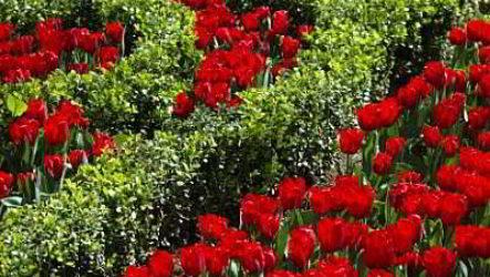Как сделать сад цветущим с ранней весны до поздней осени