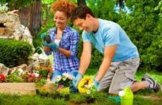 Как посадить растение в саду правильно