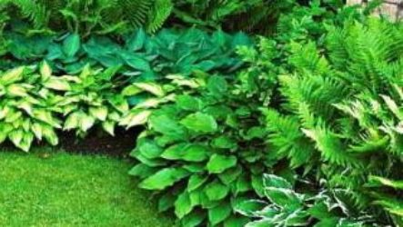 Цветник в тени. Садовые растения для тенистого цветника