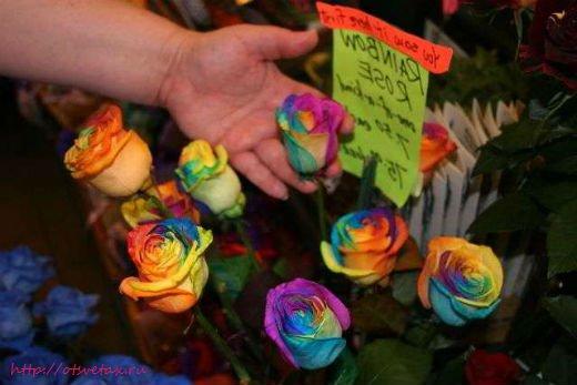 голландия цветок