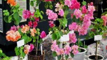 Выставка комнатных цветов «Осенний вальс» проходит в Иркутске