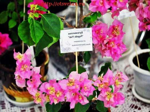 комнатные цветы выставка