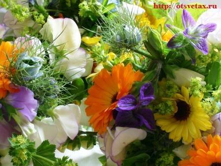 комнатные цветы почтой