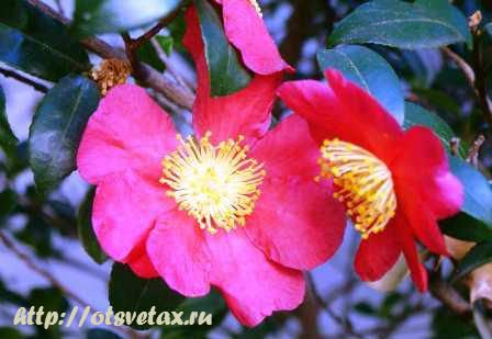цветы язык цветов