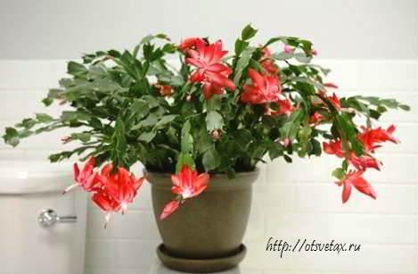 выбрать комнатное растение
