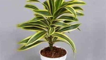 По каким критериям выбирать комнатные растения