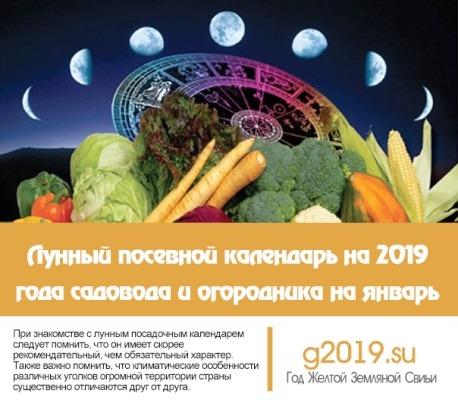 lunnyj-posevnoj-kalendar-na-2019-goda-sadovoda-i-ogorodnika-na-yanvar