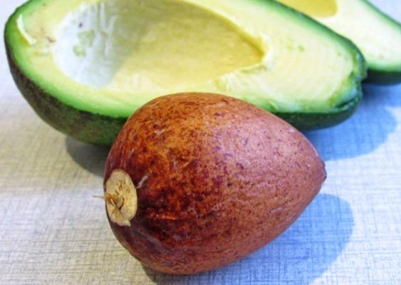 извлечение косточки авокадо для проращивания