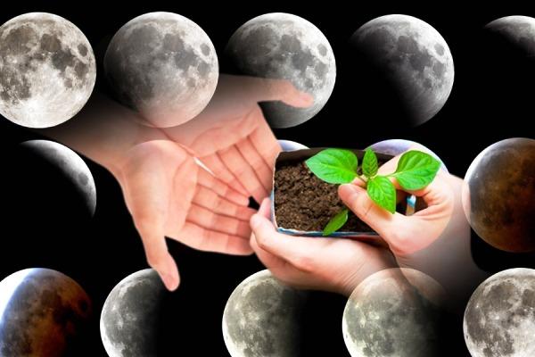 садовод лунный календарь
