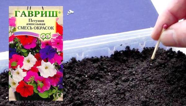 петуния сажать семена в 2019 году когда