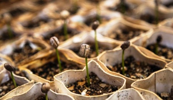 когда сажать в 2019 году семена баклажан по лунному календарю