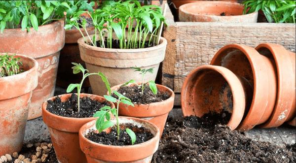посадка помидор на рассаду в 2019 году