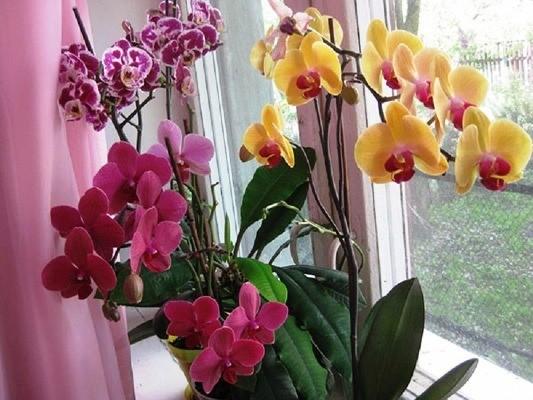 цветы орхидеи на подоконнике