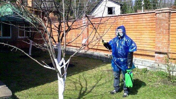 тля на деревьях как избавиться народными средствами