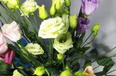 Эустома: фото цветов, как выглядит, чем похожа на розу
