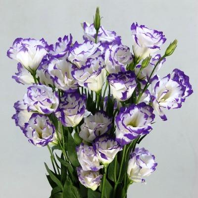 эустома фото цветов в букете