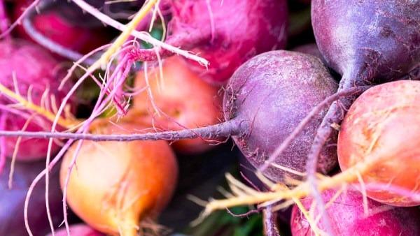 свекла корнеплод разные сорта овоща