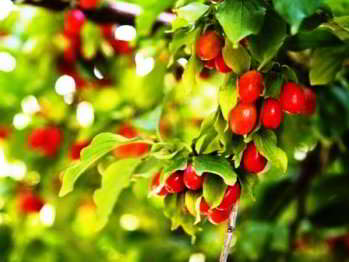 плодовые деревья и кустарники