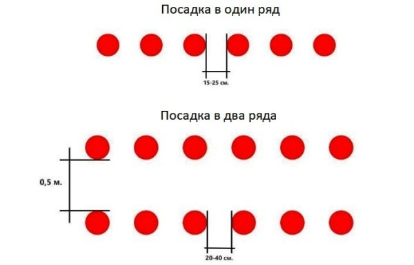 shema-posadki-клубники-осенью