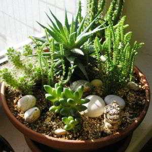 суккуленты-кактусы