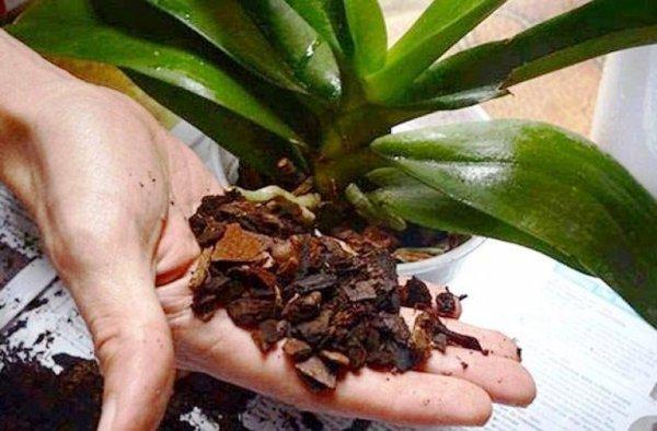 грунт для орхидеи при пересадке