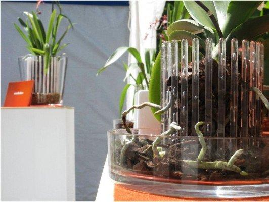 горшок для пересадки орхидеи