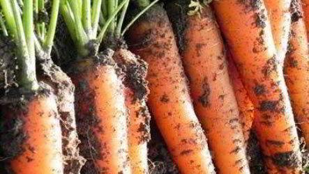 Как сохранить морковь зимой лучшие способы