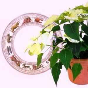 Какие цветы принесут удачу каждому знаку зодиака