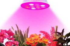 Лампа для подсветки рассады на подоконнике как выбрать
