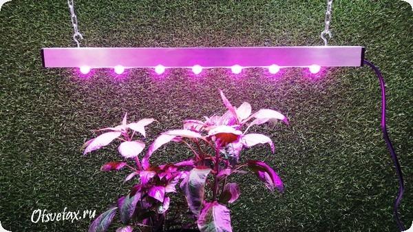 светодиодная фитолампа для подсветки рассады