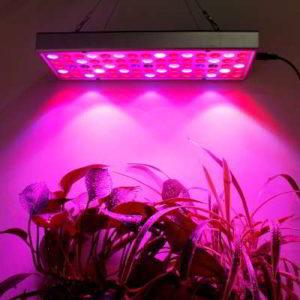 Какая подсветка лучше для рассады, лампы для подсветки рассады