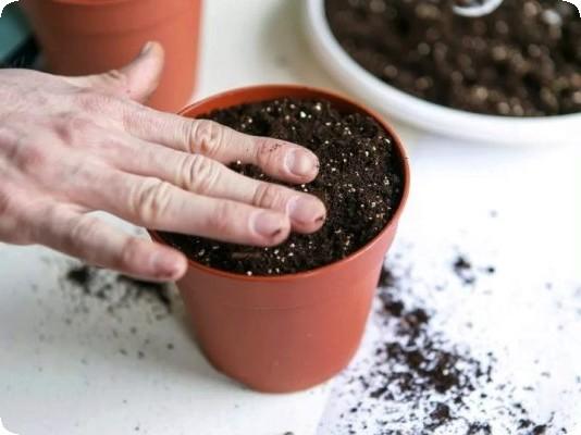 приготовление грунта для бегоний своими руками