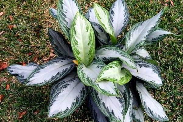 растение в саду