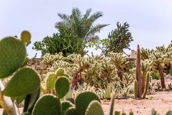 пальмы в египте флора