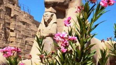 Завораживающая флора Египта разнообразна и удивительна