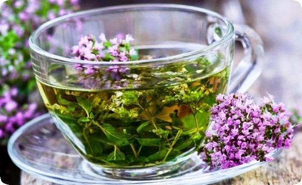 чай из травы чабрец