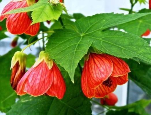 цветущие комнатные растения фото и названия уход в домашних условиях