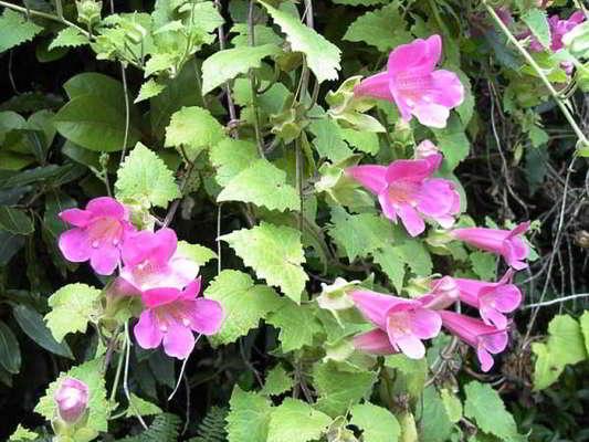 какие цветы сажать на рассаду в марте однолетние