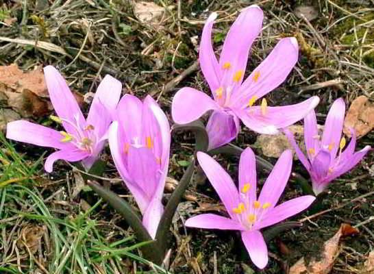 весенний цветок название