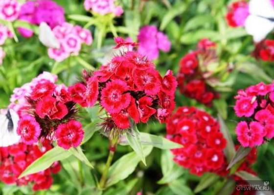 какие цветы и кустарники сажают осенью