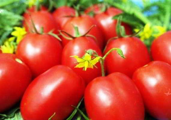 помидоры для теплицы из поликарбоната сорта лучшие низкорослые