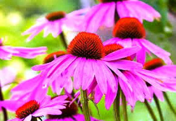 какие цветы сеять в марте на рассаду