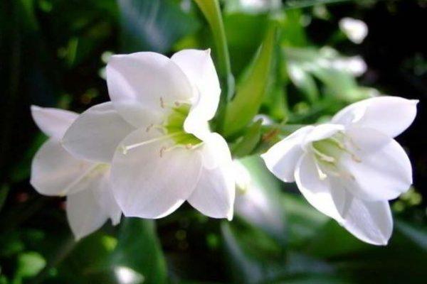 цветущие комнатные цветы фото с названием