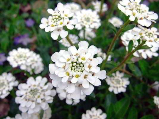 цветы которые нужно сеять на рассаду в марте